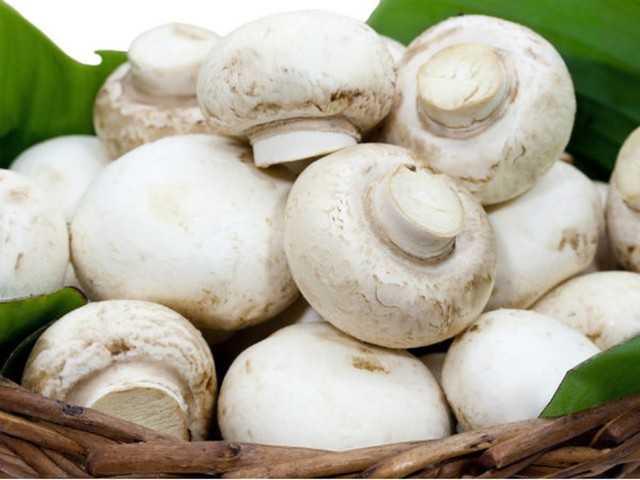 Маринованные шампиньоны: 7 рецептов быстрого приготовления   народные знания от кравченко анатолия