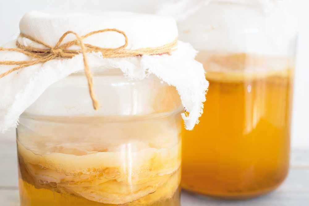 Чайный гриб – выращивание, размножение, полезные свойства
