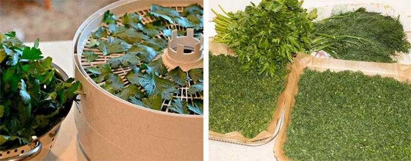 Сушка травы в домашних условиях: 8 простых способов / заготовочки