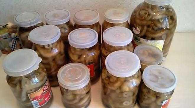 Как солить грузди сухим способом, варианты приготовления закуски в банке, ведре, в бочке. Рецепты грибов по-алтайски, с хреном, укропом, чесноком, дубовыми и вишневыми листьями.