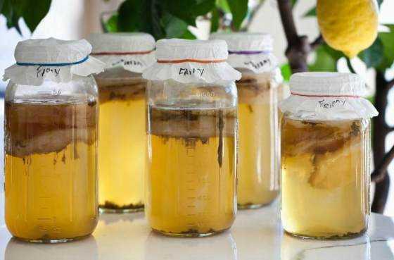 Уход за чайным грибом в домашних условиях: инструкция по выращиванию