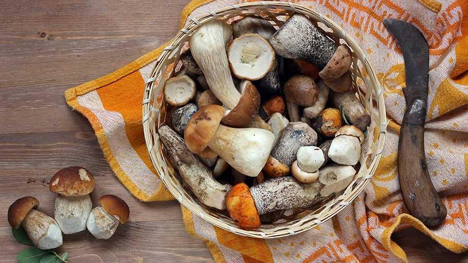 Как правильно хранить грибы: проверенные способы