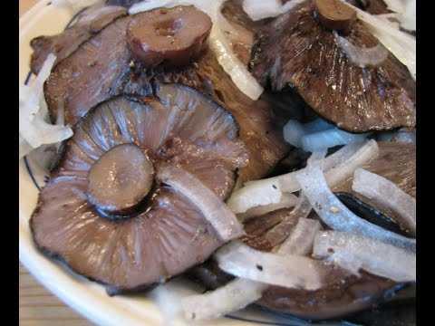 Как засолить грибы белянки в домашних условиях