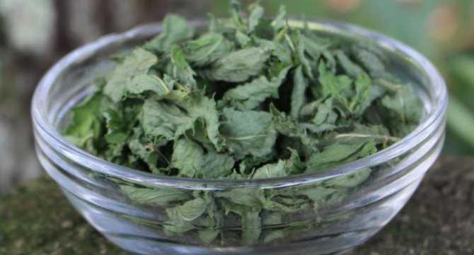 Мохито — 7 безалкогольных рецептов в домашних условиях