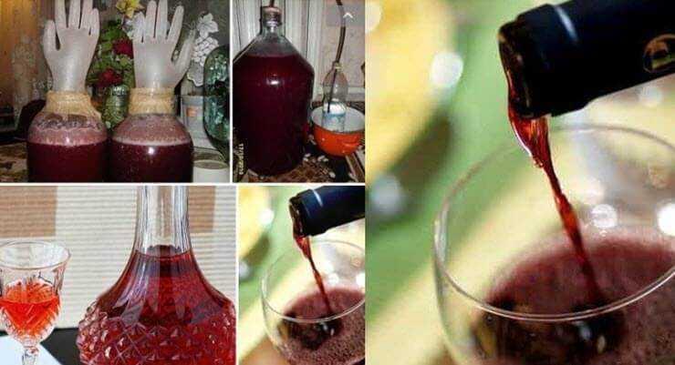 Сливовое вино — рецепты приготовления вкусного напитка в домашних условиях