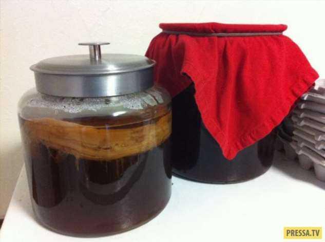Как ухаживать и употреблять чайный гриб