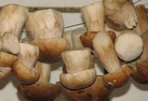 ✅ как сушить грибы маслята в домашних условиях - питомник46.рф