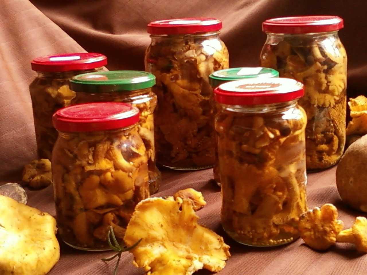 Грибы лисички: рецепты приготовления их на зиму