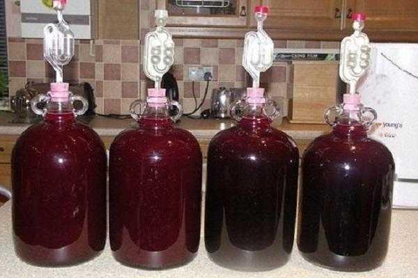 Вино из персиков в домашних условиях 12 простых рецептов приготовления