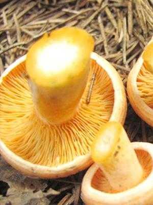 Как заморозить жареные грибы на зиму - 8 пошаговых фото в рецепте