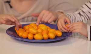 Цукаты: калорийность, польза, вред, состав | food and health