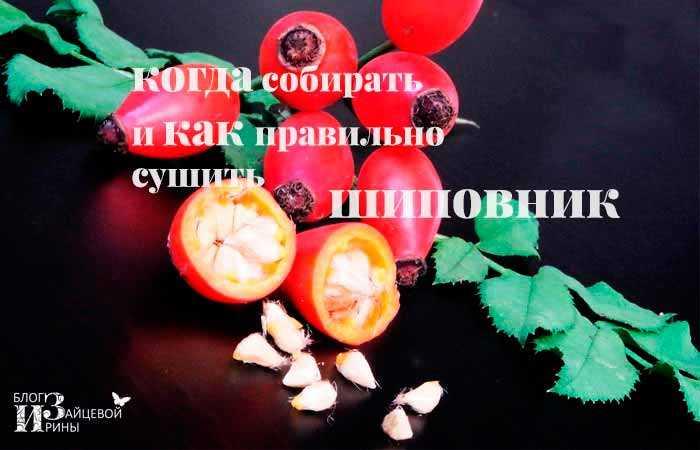 Как сушить шиповник: правильная сушка в домашних условиях - засушим.ru