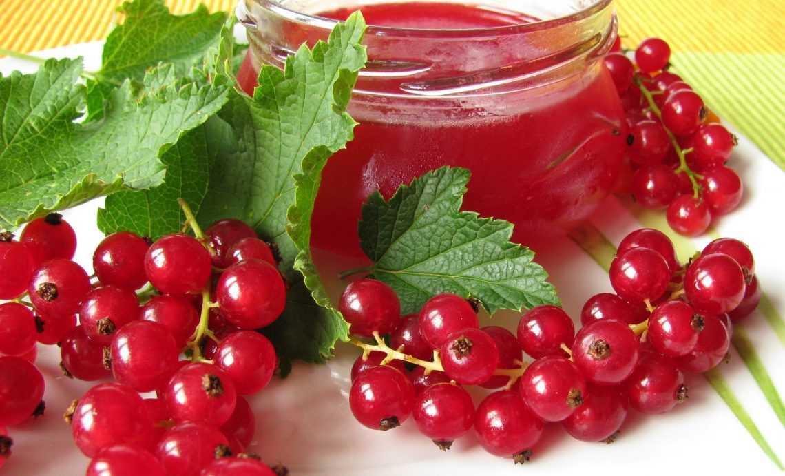 Желе из красной смородины на зиму: простые рецепты, классические и оригинальные, без варки и традиционные