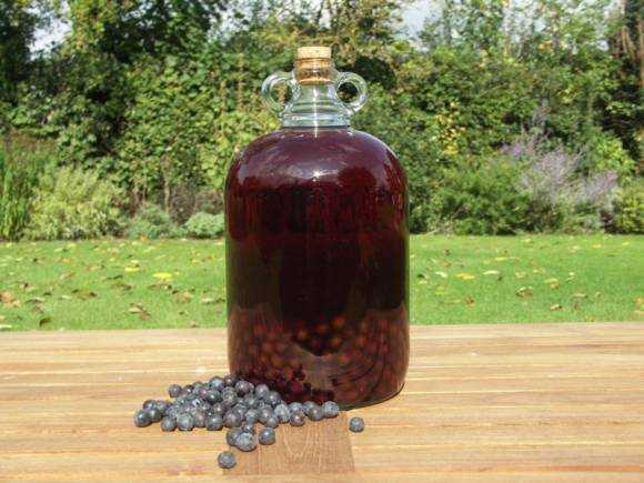 Аджика без чеснока на зиму: ингредиенты, особенности приготовления, рецепт с описанием и фото
