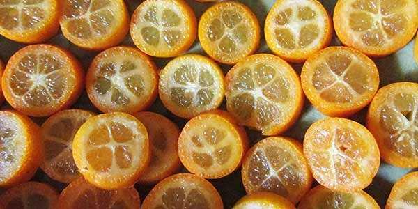 Кумкват: полезные свойства сушеного, вяленого и свежего фрукта | портал общения и самосовершенствования
