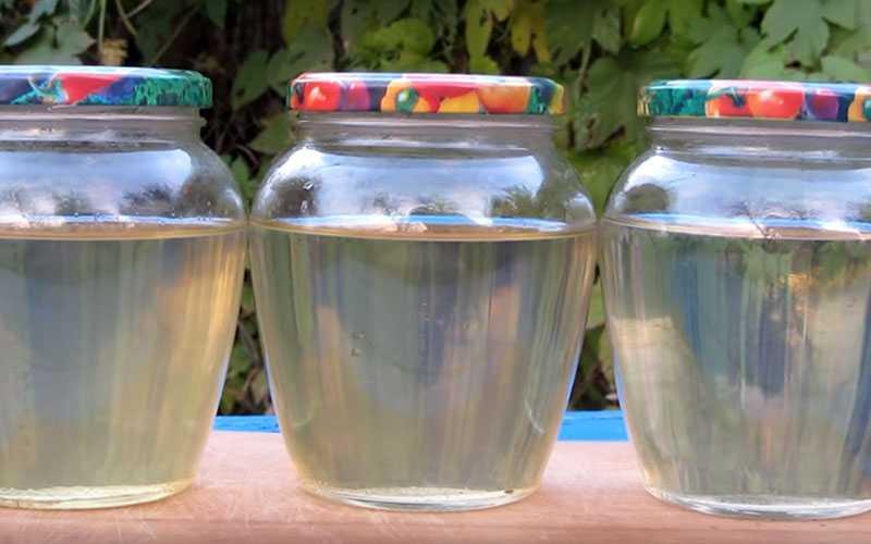 Настойка можжевельника на водке польза и вред