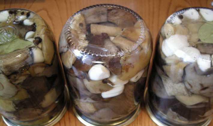 Что можно делать с грибами рядовками: рецепты соления, жарки, маринования и запекания