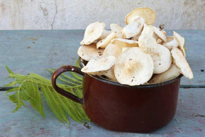 Способы и рецепты засолки грибов рядовок на зиму (+20 фото)