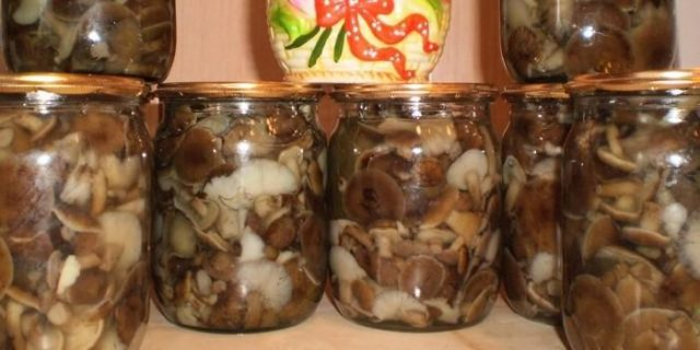Как солить горькушки – рецепты засолки в домашних условиях горячим и холодным способом