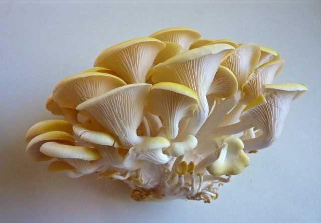 Как готовить сушеные белые грибы: рецепты
