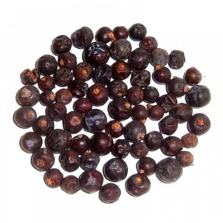 Самогон на можжевеловых ягодах: рецепты, полезные свойства