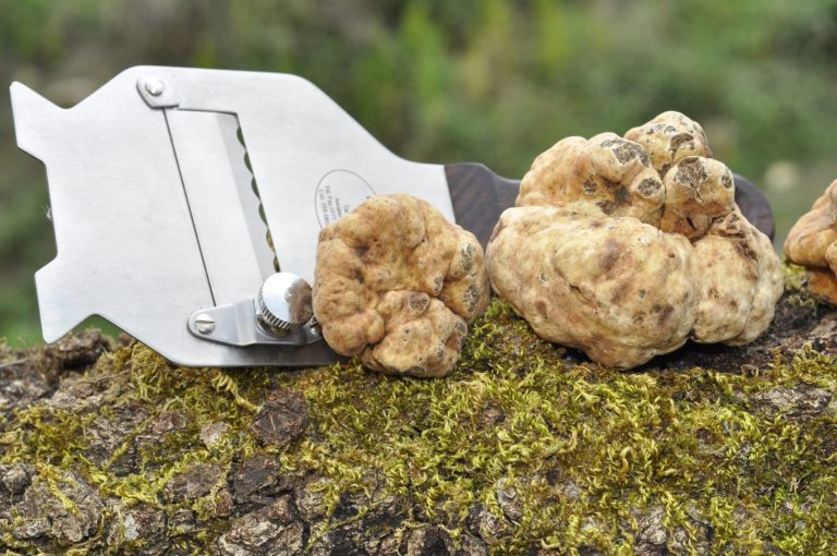 Как правильно готовить трюфель в домашних условиях. С чем едят редкий гриб и куда добавляют. Особенности и традиции использования трюфеля в кулинарии.