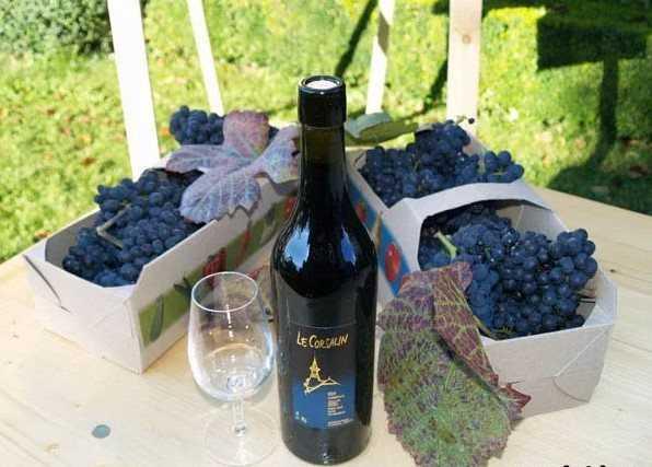 Как сделать крепленое вино из винограда в домашних условиях (ассортимент крепленых вин)