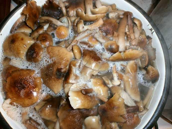 Как солить волнушки в домашних условиях: рецепты