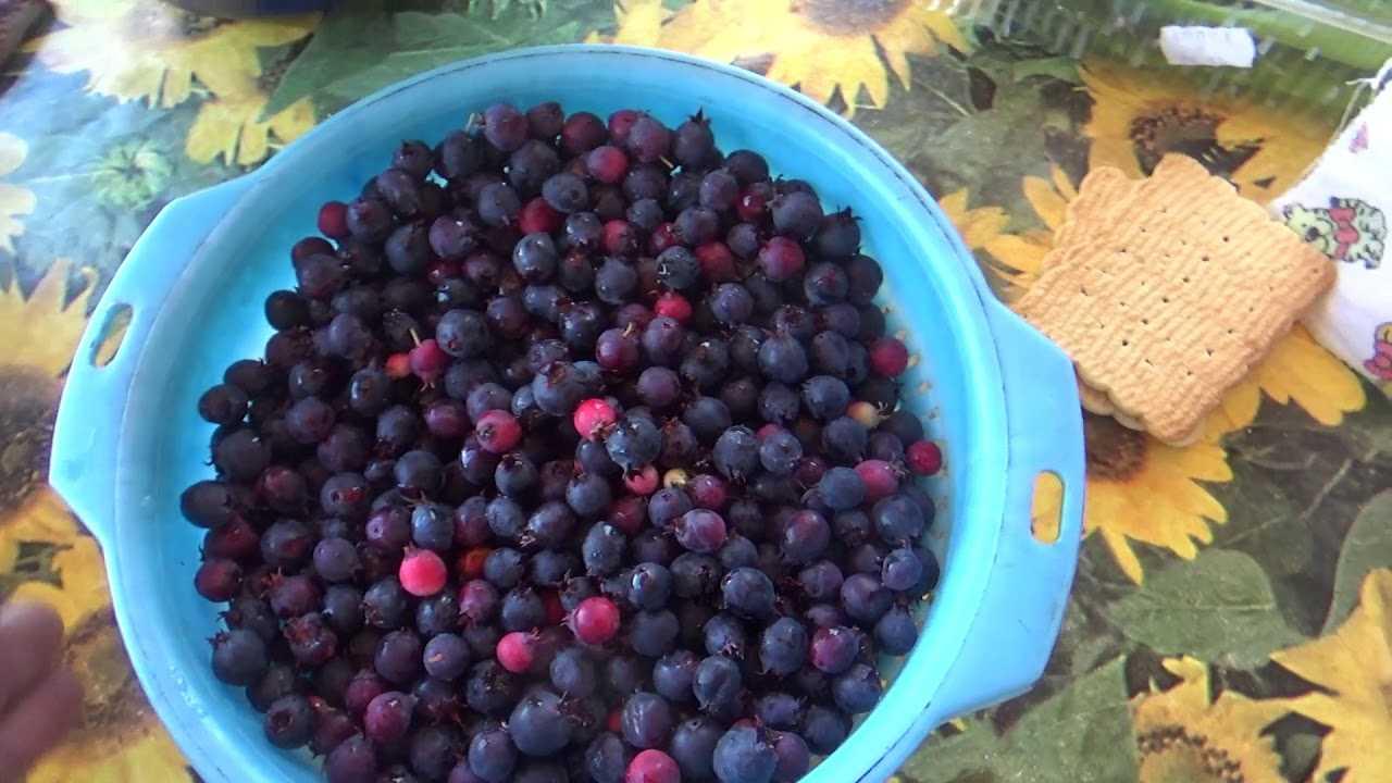 Компот из замороженных ягод — источник витаминов и пользы