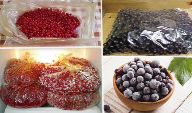 Как заморозить вишню на зиму в холодильнике