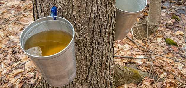 Сколько хранится консервированный яблочный сок домашний — читать ответ