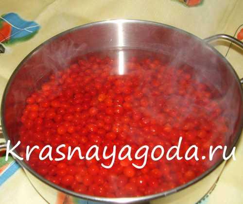 Калина красная: лучшие рецепты заготовок на зиму