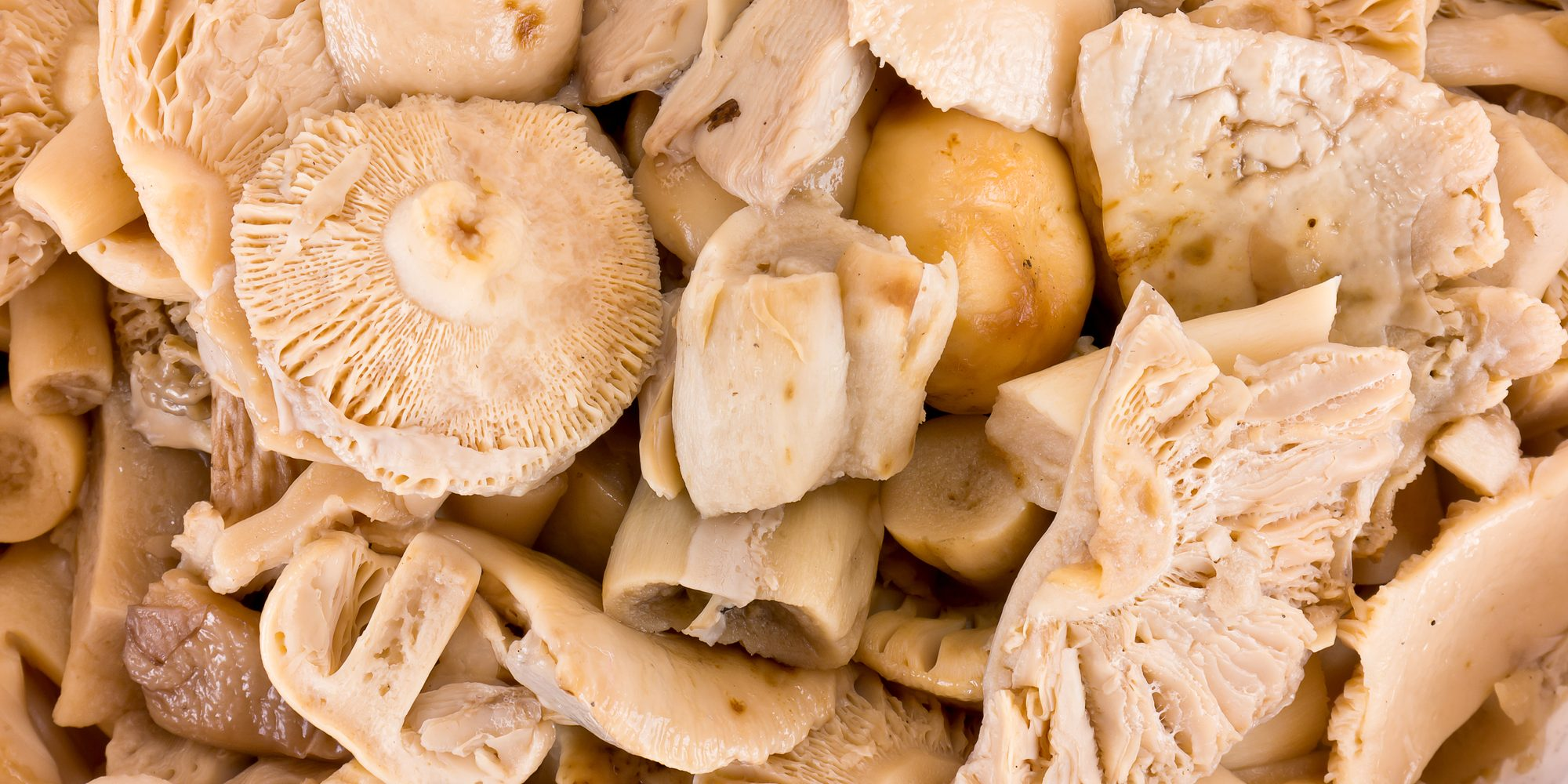Грибы сыроежки - виды, ложные сыроежки, рецепты блюд