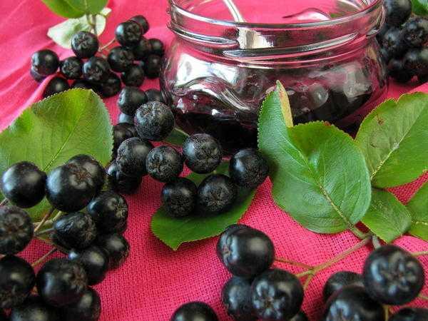 Рецепты напитков из черноплодной рябины в домашних условиях