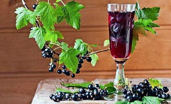 Вино из черной смородины в домашних условиях: польза и вред напитка, особенности приготовления, сроки и правила хранения. Пошаговые рецепты.