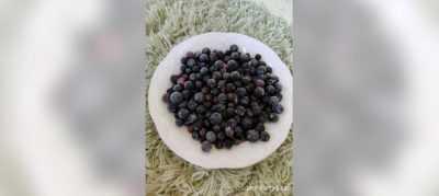 Как заморозить ягоды красной смородины на зиму в домашних условиях » сусеки