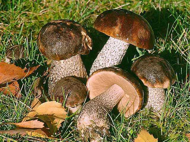 Что делать если соленые грибы заплесневели. как правильно хранить грузди после засолки