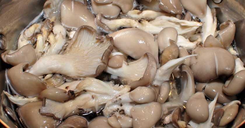 Маринованные вешенки – рецепты заготовки грибов вешенок на зиму