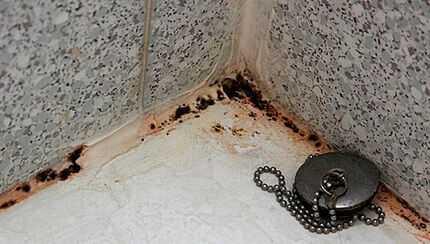 Неприятный сюрприз. что делать, если в доме завелась черная плесень