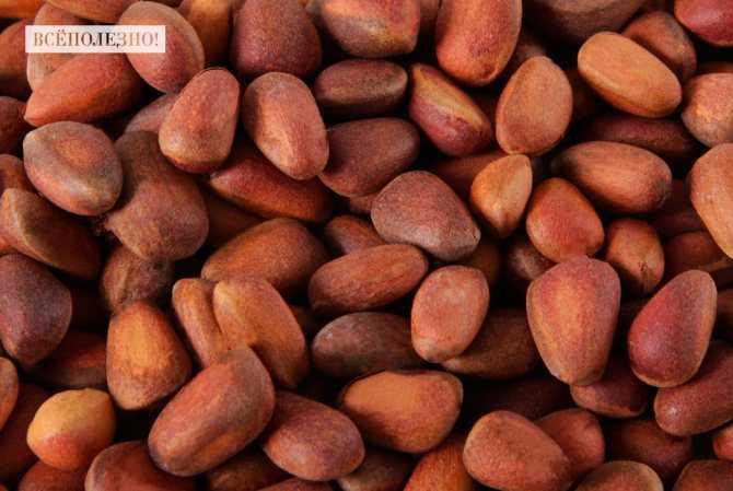Как приготовить самогон на кедровых орешках в домашних условиях