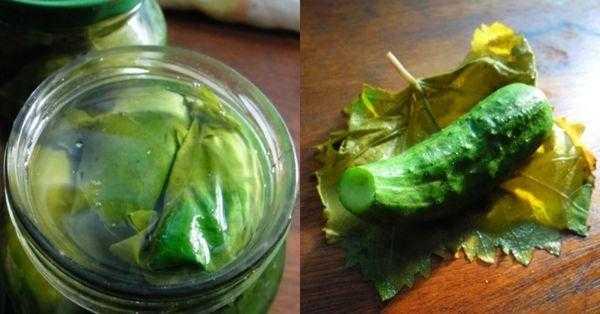 Рецепт засолки огурцов на зиму в банках: с уксусом, хрустящие, в 1 и 3 литровых емкостях, простой классический способ как солить огурчики, сколько надо
