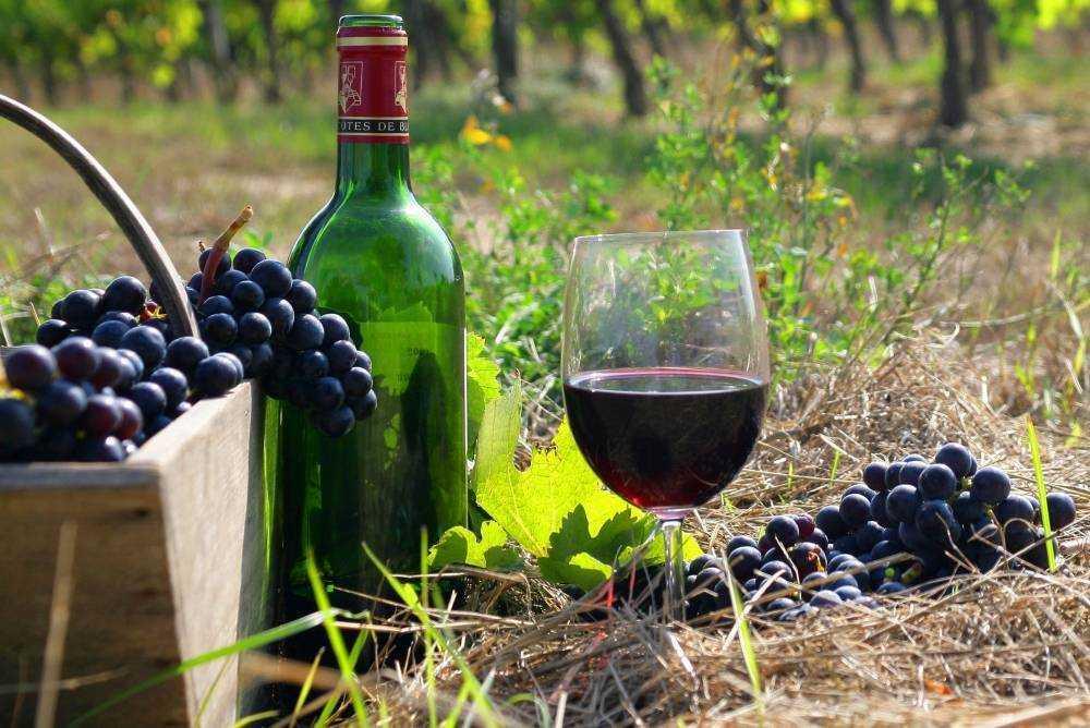 Домашнее вино из винограда «изабелла». простые рецепты приготовления
