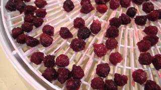 Сушеная (вяленая) вишня: калорийность, польза, как сушить, как хранить, что приготовить