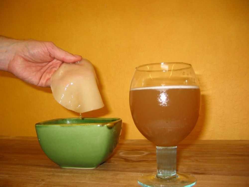 Чайный гриб при сахарном диабете: состав и польза напитка. Советы по приготовлению и употреблению средства. Когда чайный гриб употреблять нельзя.