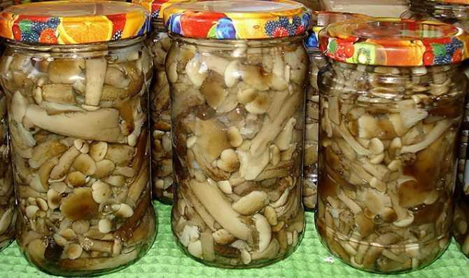 Реферат на тему: грибы. заготовка грибов впрок, рецепты и полезные советы