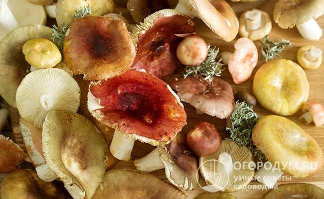 Засолка грибов на зиму русский фермер