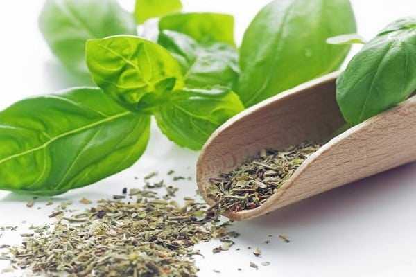 Как сушить базилик, полезные свойства и применение в домашних условиях - всё про сады
