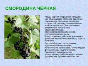 Домашний рецепт настойки из чёрной смородины