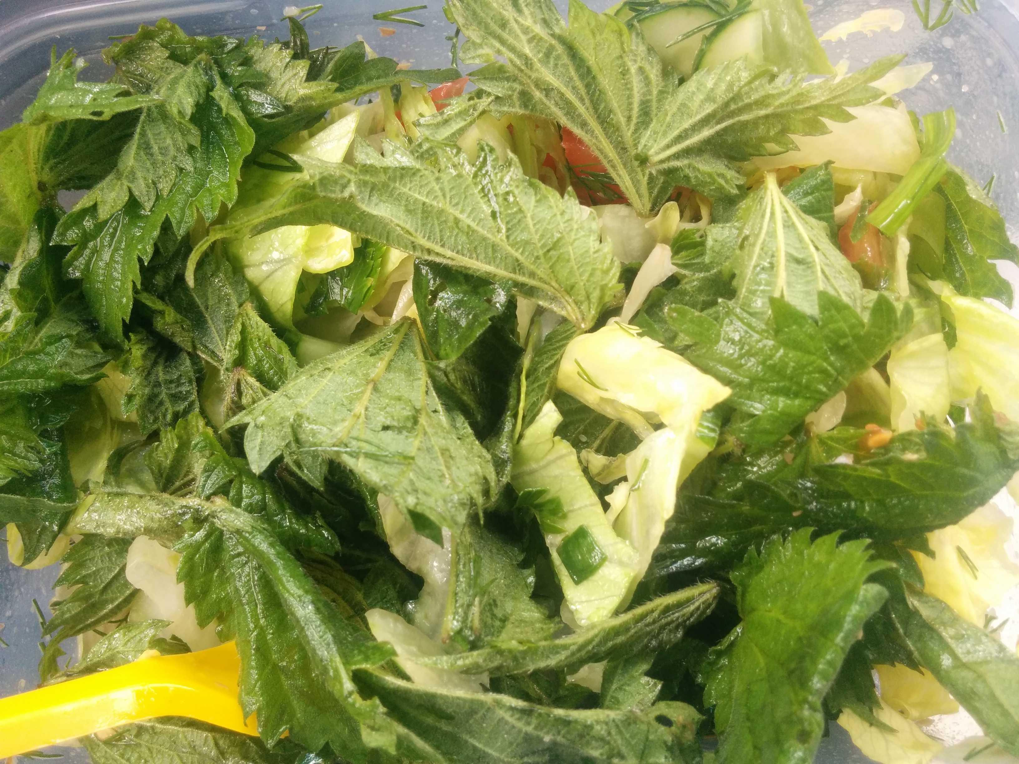 Салат из крапивы с яйцами на скорую руку рецепт с фото пошагово и видео - 1000.menu