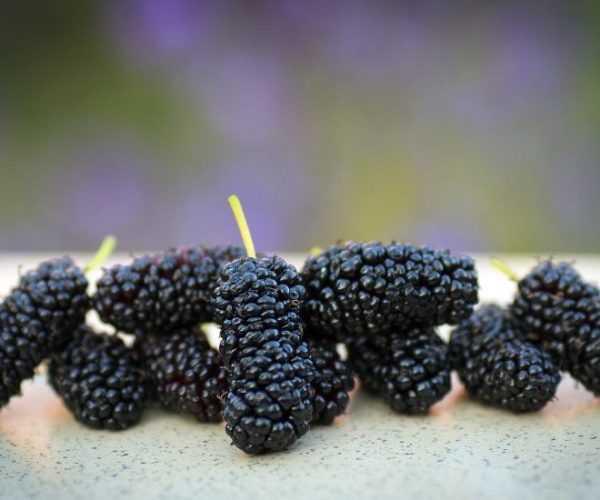 Шелковица калорийность на 100 грамм, вред, польза – хорошие привычки
